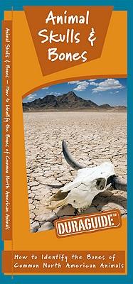 Animal Skulls & Bones By Kavanagh, James/ Leung, Raymond (ILT)
